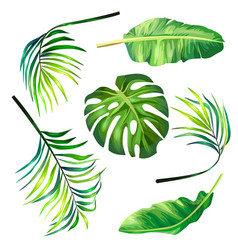 set of botanical of tropical vector image vector image