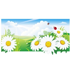 Summer landscape with a chamomile vector