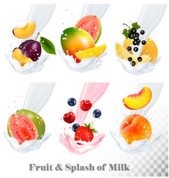 Big collection icons of fruit in a milk splash vector