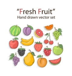 Fruit set isolated vector image