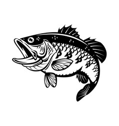 graphic bass fish vector image