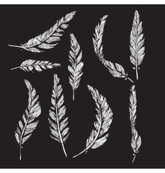 Collection of white feathers vector