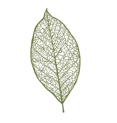 nut leaf isolated on white background vector image