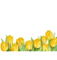 Tulip flowers as a holiday postcard EPS 10 vector image vector image