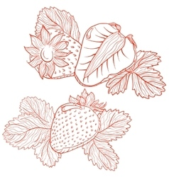 drawing of strawberries vector image
