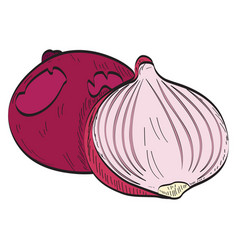 pair of onions vector image vector image