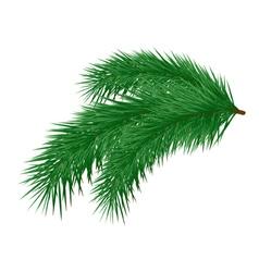 Pine branch vector image vector image
