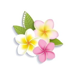 Plumeria flowers on a white background vector