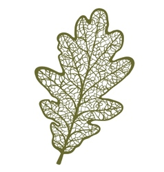 Oak leaf isolated on white background vector