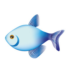 Colorful fish aquatic animal icon vector