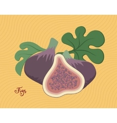 Figs fruit with leaves vector