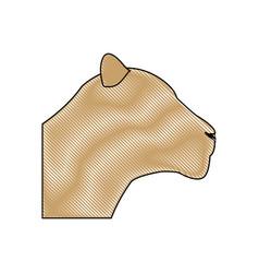 head female lion african animal beast vector image