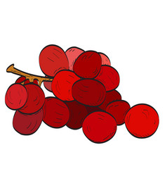 Isolated group of plums vector