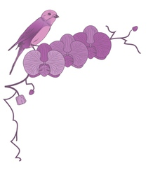 orchid and bird vector image