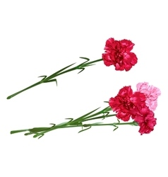 Red clove bouquet of carnations set carnation vector