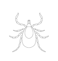 Tick parasite sketch of tick mite tick isolated vector
