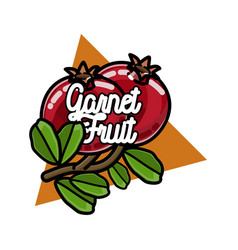 color vintage fruit emblem vector image