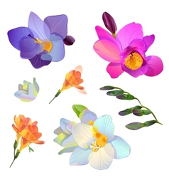 Freesia flowers and branches for your design vector