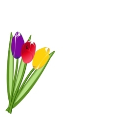 Three colored tulip vector image