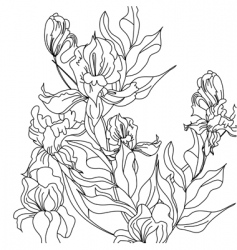 Sketch with iris flowers vector