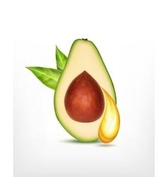Avocado with oil drop vector image vector image