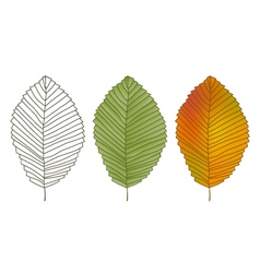 Leafs vector image vector image