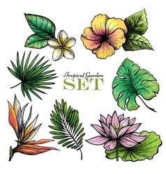 Tropical leaves set color vector