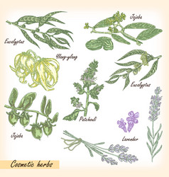 cosmetic herbs set vector image vector image