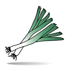 Freehand drawing leek icon vector image vector image