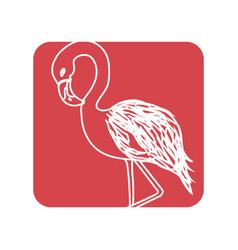 Label beauty and exotic flamingo bird animal vector