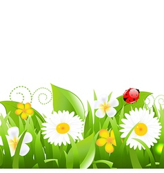 Flowers with grass leafs and ladybug vector