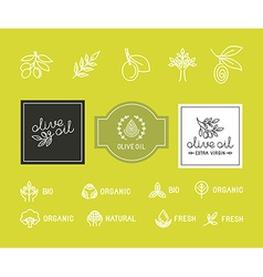 Olive-packaging vector