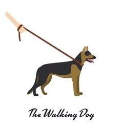 German shepherd with a leash - on white background vector