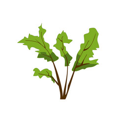 green herbal plant isolated on white bush with vector image vector image