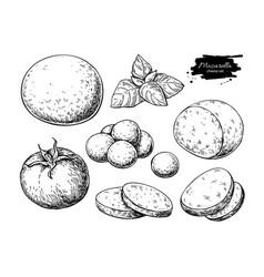 mozzarella cheese drawing hand drawn round vector image vector image