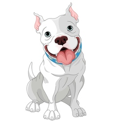 Pit-Bull vector image vector image