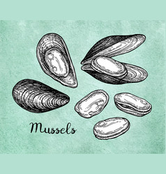 mussels ink sketch on old paper vector image vector image