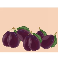 Plum fruits isolated vector