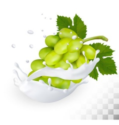 Green grape in a milk splash on a transparent vector