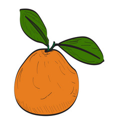 Isolated peach vector