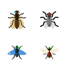 Flat icon buzz set of dung gnat mosquito and vector
