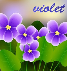 Spring background with blossom brunch of violet vector