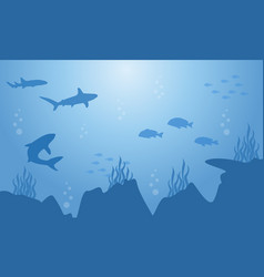 silhouette of fish and shark on sea landscape vector image