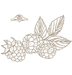 Outline hand drawn raspberry flat style th vector