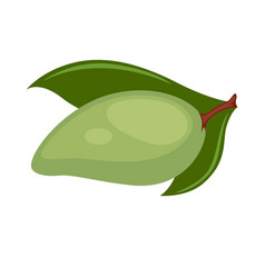 avocado with green leaves isolated on white vector image vector image