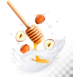 Hazelnut and honey in a milk splash on a vector
