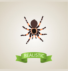 Realistic black widow element vector