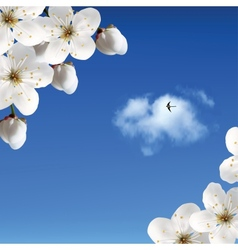 Cherry Blossoms Against The Sky And Clouds vector image