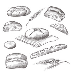 collection of hand drawn icons of bareky products vector image vector image