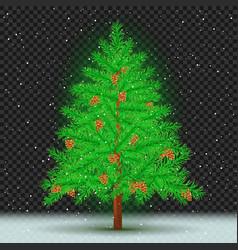 spruce tree dark transparent background vector image vector image